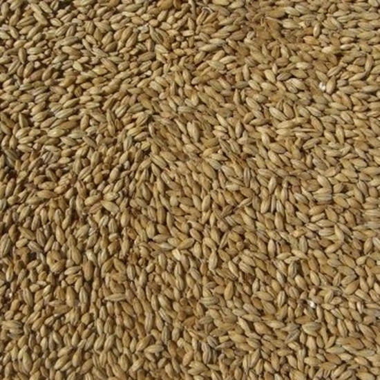 Picture of Ale Malt (Barrett Burston)