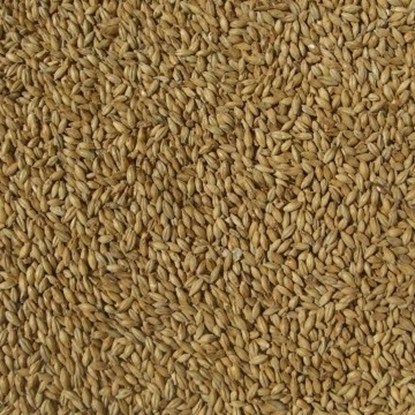 Picture of Ale - Maris Otter Malt (Thomas Fawcett Floor Malted)