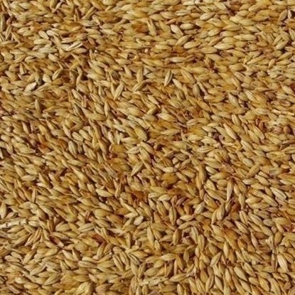 Picture of Biscuit Malt - Belgian (Dingemans)