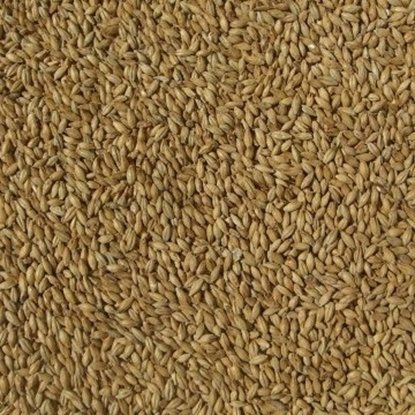 Picture of Ale Malt - Golden Promise (Simpsons)